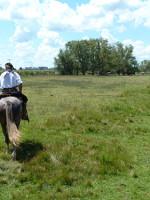 Horseback riding on the pampas