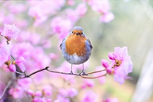 A spring bird on a branch